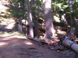 Hiking around a bear.