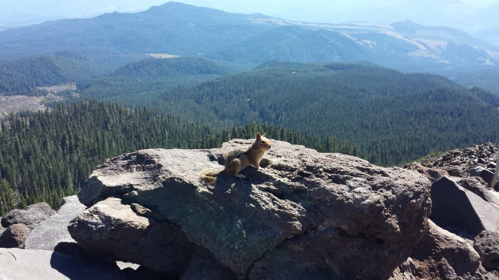 On the way down, I saw a chipmunk that wasn't afraid of me at all.